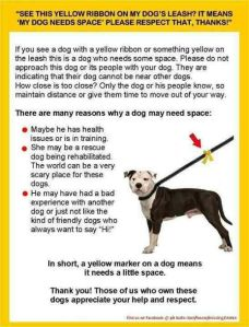 yellow ribbon on dog leash