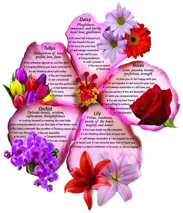 Language of Flowers Infographic Blooms Today